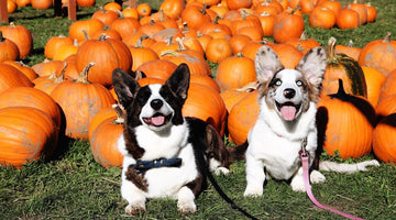 To the Pumpkin Patch!