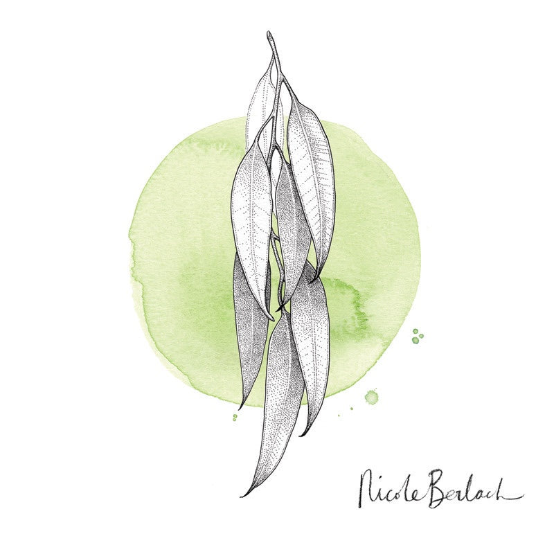 Print of Nicole Berlach's 'Gum on Green' watercolour available at Tribe Castlemaine