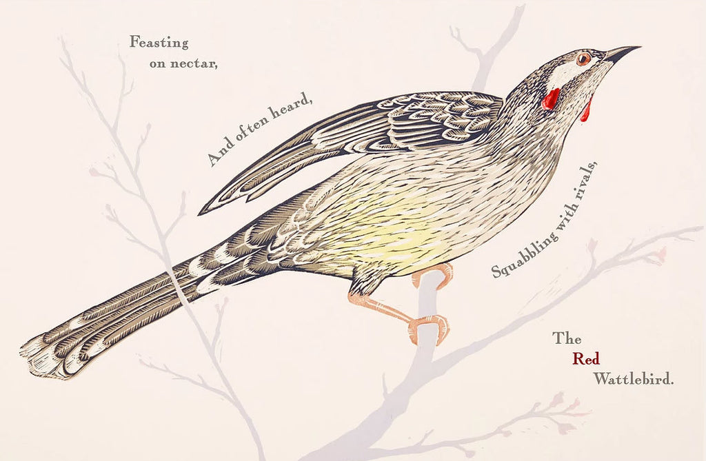 Kookaburra Kookaburra children's picture book by Bridget Farmer available at Tribe Castlemaine