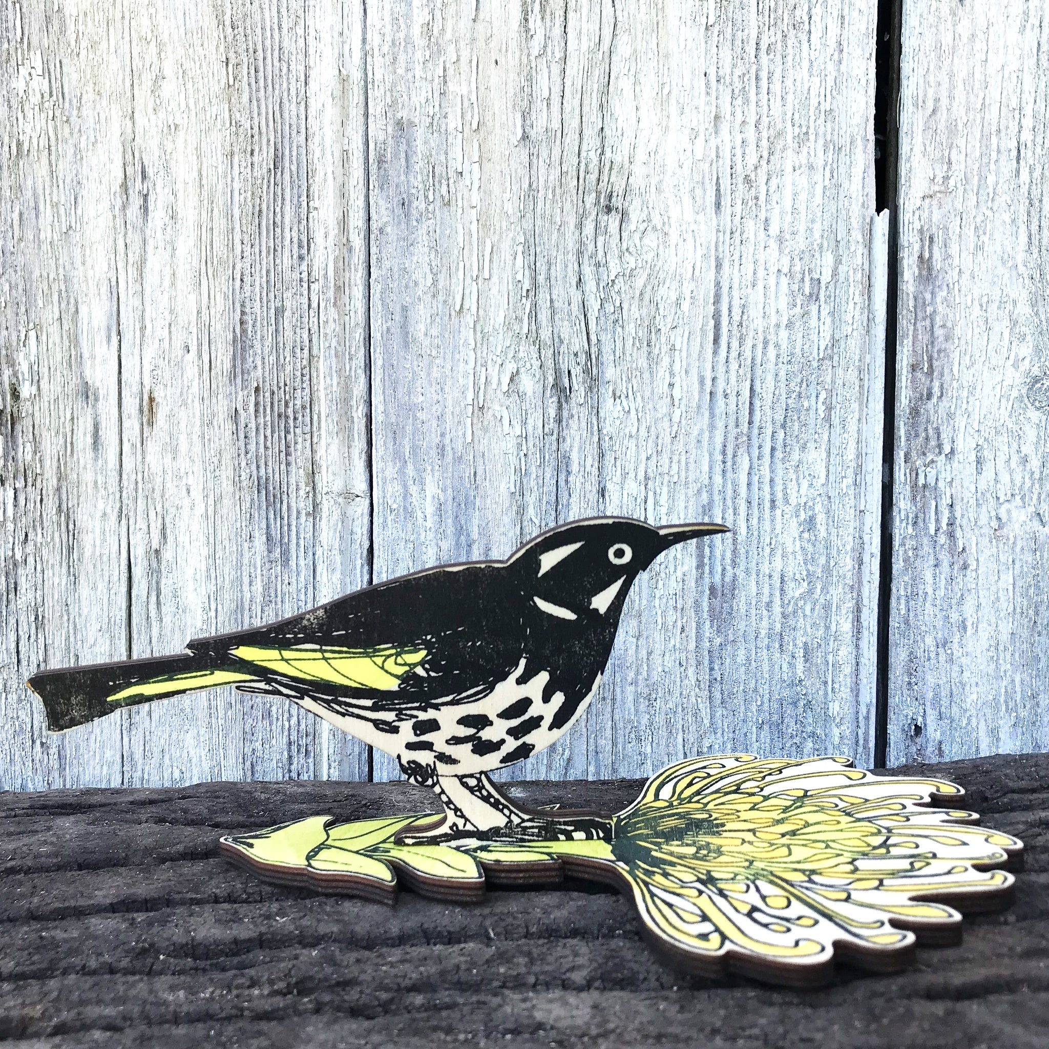 Standing Bird : New Holland Honey Eater