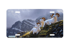 "Airstrike® 8286-""Summit Sanctuary""-Dalls Sheep License Plate"