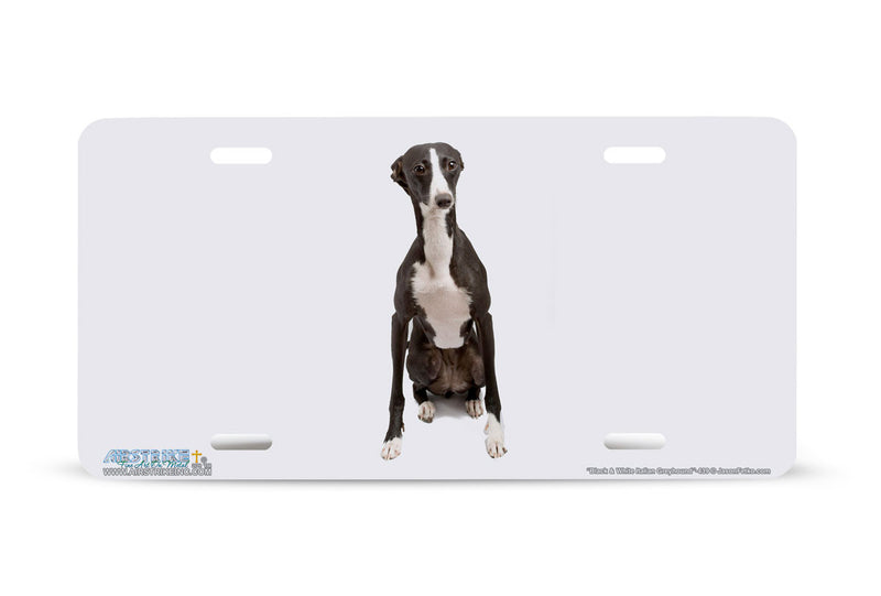"Airstrike® 439-""Black and White Italian Greyhound"" Dog License Plates"