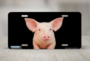 "Airstrike® 619-""Pig in the Middle"" Swine License Plate"