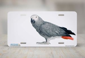 "Airstrike® 285-""African Grey"" Bird License Plate"