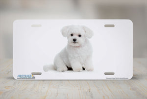 "Airstrike® 531-""Havanese Puppy""-Havanese Dog License Plate"