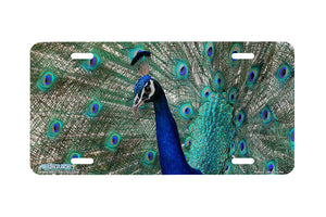 "Airstrike® 286-""Peacock"" Peacock License Plates"