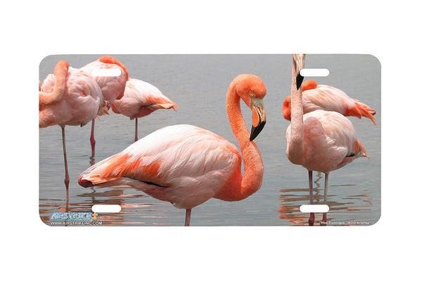 "Airstrike® 263-""Flamingos"" Flamingo License Plates"