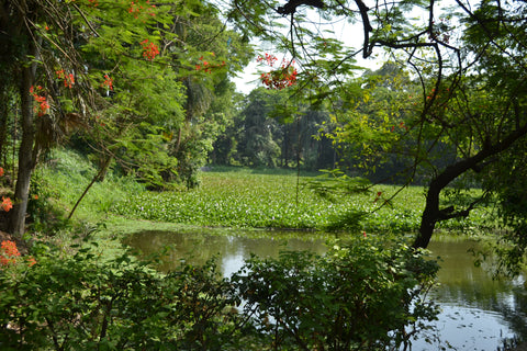Botanical Gardens in Kolkata