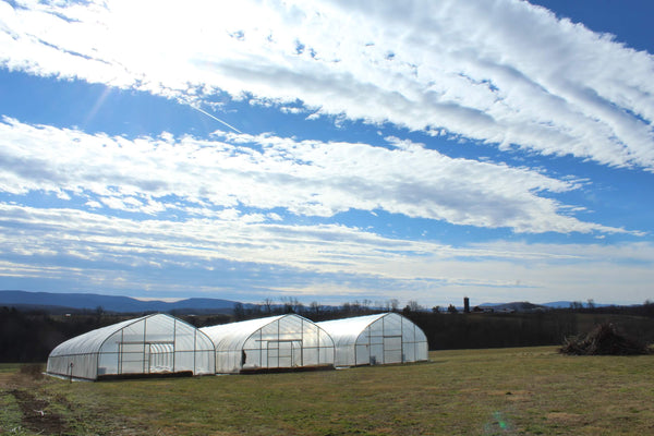 flower farm greenhouses with blue sky