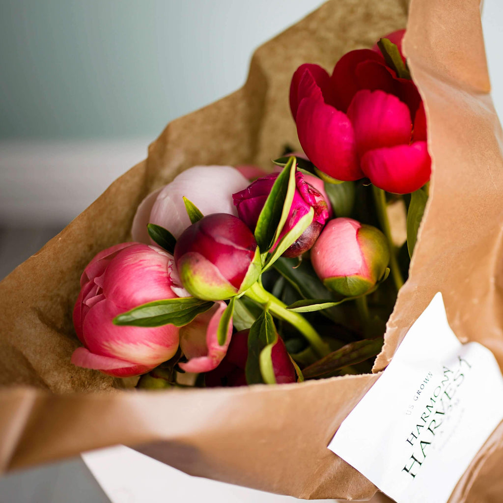 The Peony and Puns Box