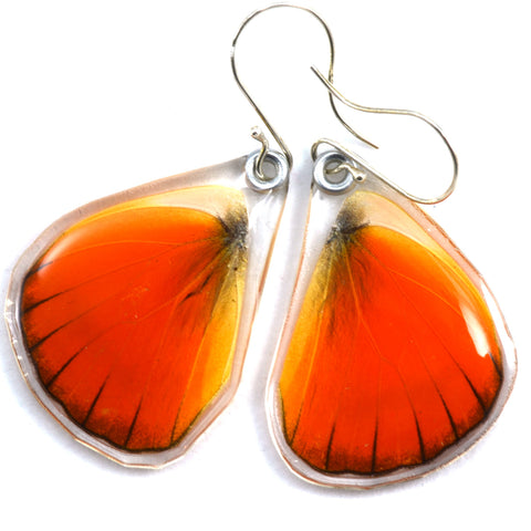 Butterfly earrings, Orange Albatross, bottom wings