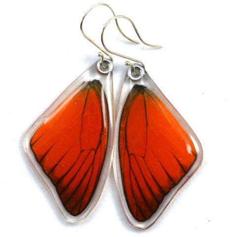 Butterfly earrings, Orange Albatross, top wings