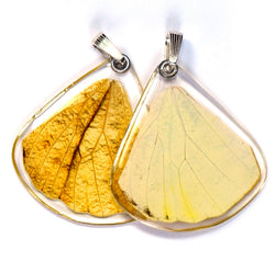 Butterfly wing pendant ONLY, Hebomoia Glaucippe, bottom wing