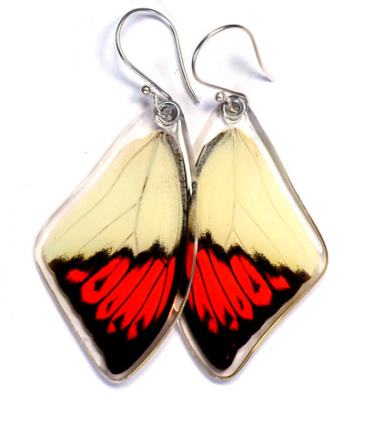 Real Butterfly earrings, Hebomoia Glaucippe, top wings