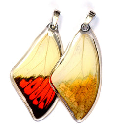 Butterfly wing pendant ONLY, Hebomoia Glaucippe, top wing