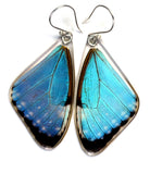 Butterfly earrings, Blue Morpho Portis, top wings
