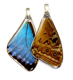 Butterfly wing pendant ONLY, Blue Morpho Portis, top wing