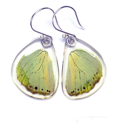 Butterfly earrings, Charaxes Eupale, bottom wings