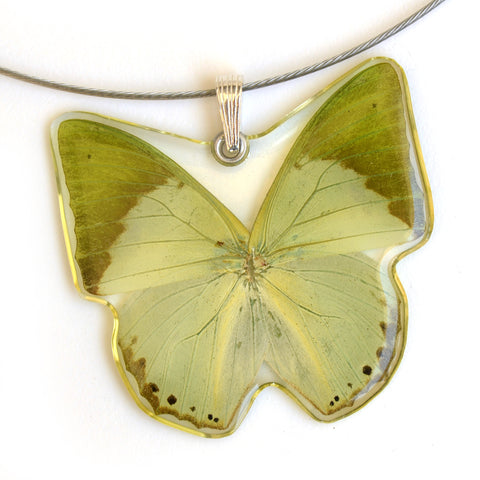 Whole Butterfly Pendant, Charaxes Eupale