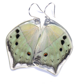 Butterfly earrings, Salamis Parhasus, bottom wings
