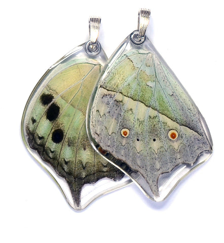 Butterfly wing pendant ONLY, Salamis Parhasus, bottom wing