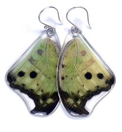 Butterfly earrings, Salamis Parhasus, top wings
