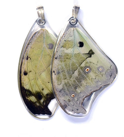 Butterfly wing pendant ONLY, Salamis Parhasus, top wing