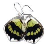 Butterfly earrings, Siproeta Stelenes, bottom wings