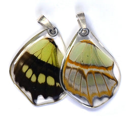 Butterfly wing pendant ONLY, Siproeta Stelenes, bottom wing