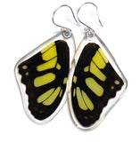 Butterfly earrings, Siproeta Stelenes, top wings
