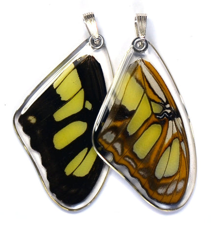 Butterfly wing pendant ONLY, Siproeta Stelenes, top wing