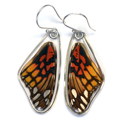 Butterfly earrings, Mexican Silverspot Butterfly, top wings