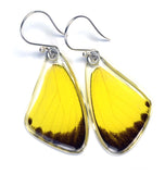 Butterfly earrings, Grass Yellow Butterfly, top wings
