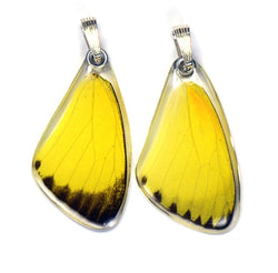 Butterfly wing pendant ONLY, Grass Yellow Butterfly, top wing