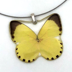 Whole Butterfly Pendant, Grass Yellow Butterfly
