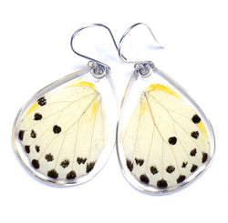 Butterfly earrings, Calypso Caper White Butterfly, bottom wings
