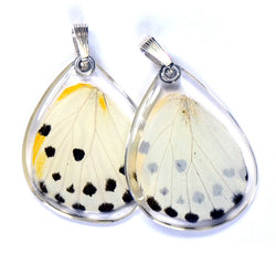 Butterfly wing pendant ONLY, Calypso Caper White Butterfly, bottom wing