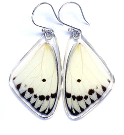 Butterfly earrings, Calypso Caper White Butterfly, top wings