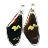 Butterfly wing pendant ONLY, Doris Longwing Butterfly, top wing