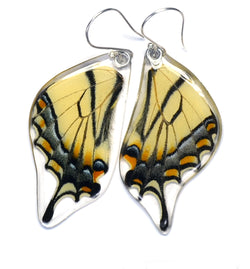 Butterfly earrings, Eastern Tiger Swallowtail Butterfly, bottom wings