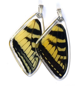 Butterfly wing pendant ONLY, Eastern Tiger Swallowtail Butterfly, top wing