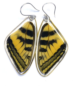 Butterfly earrings, Eastern Tiger Swallowtail Butterfly, top wings