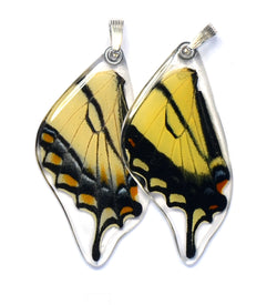 Butterfly wing pendant ONLY, Eastern Tiger Swallowtail Butterfly, bottom wing