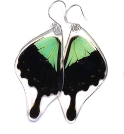 Butterfly earrings, Apple Green Swallowtail Butterfly, bottom wings
