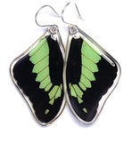 Butterfly earrings, Apple Green Swallowtail Butterfly, top wings