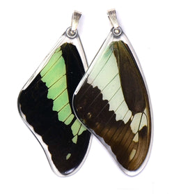Butterfly wing pendant ONLY, Apple Green Swallowtail Butterfly, top wing