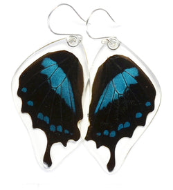 Butterfly earrings, Blue Swallowtail Oribazus Butterfly, bottom wings