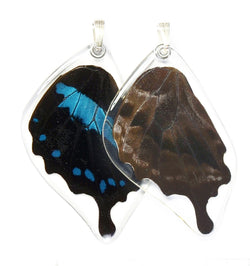 Butterfly wing pendant ONLY, Blue Swallowtail Oribazus Butterfly, bottom wing