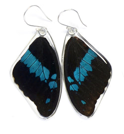 Butterfly earrings, Blue Swallowtail Oribazus Butterfly, top wings