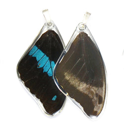 Butterfly wing pendant ONLY, Blue Swallowtail Oribazus Butterfly, top wing